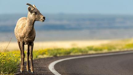 special road hazards