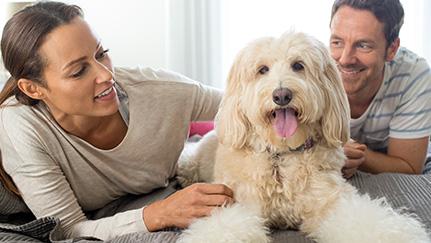 Dejar en guardería a un perro o un gato durante las vacaciones