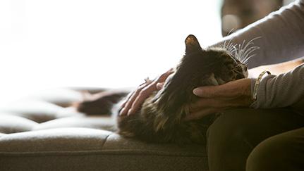 Los beneficios del seguro para mascotas