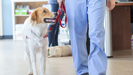 Reasons to consider pet insurance as an employee benefit